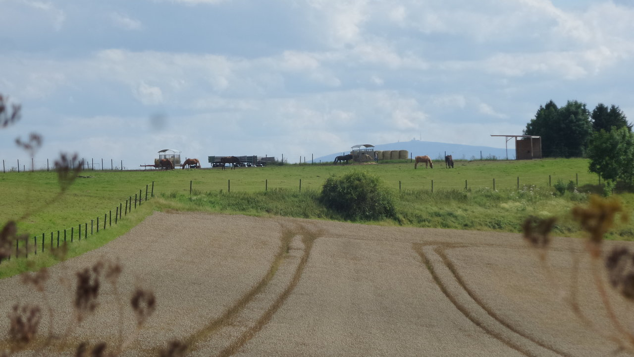 17 Pferde und Brocken.jpg