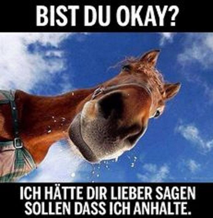 eeacd8f441bac5f6bb47a41c82071037--horse-meme-horse-humor.jpg