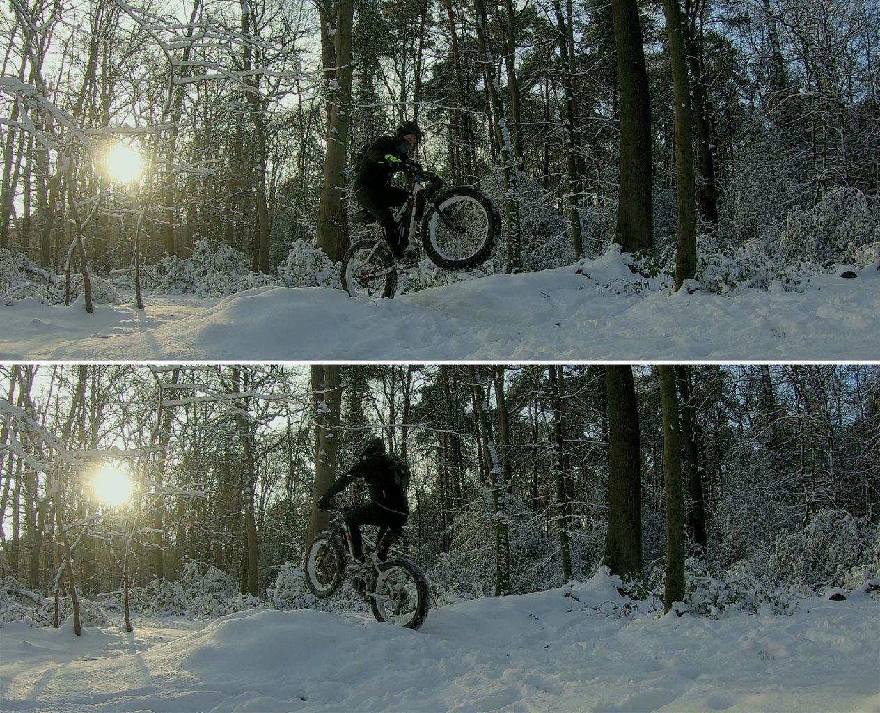Im-Wald_30-01-2021.jpg