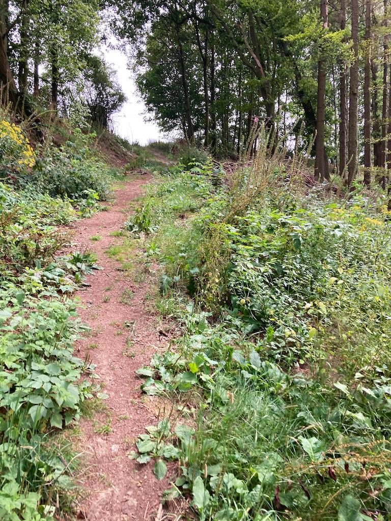 Waldrunde 3.jpg