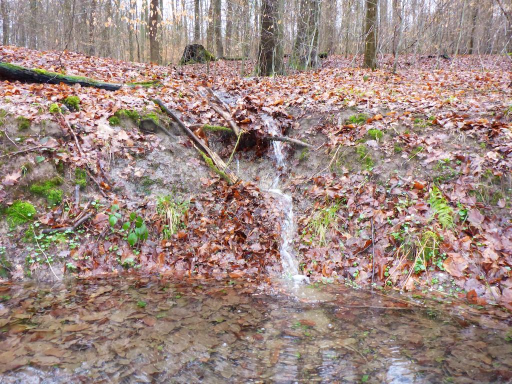 Wasserrunde_16.03.-  4.jpg